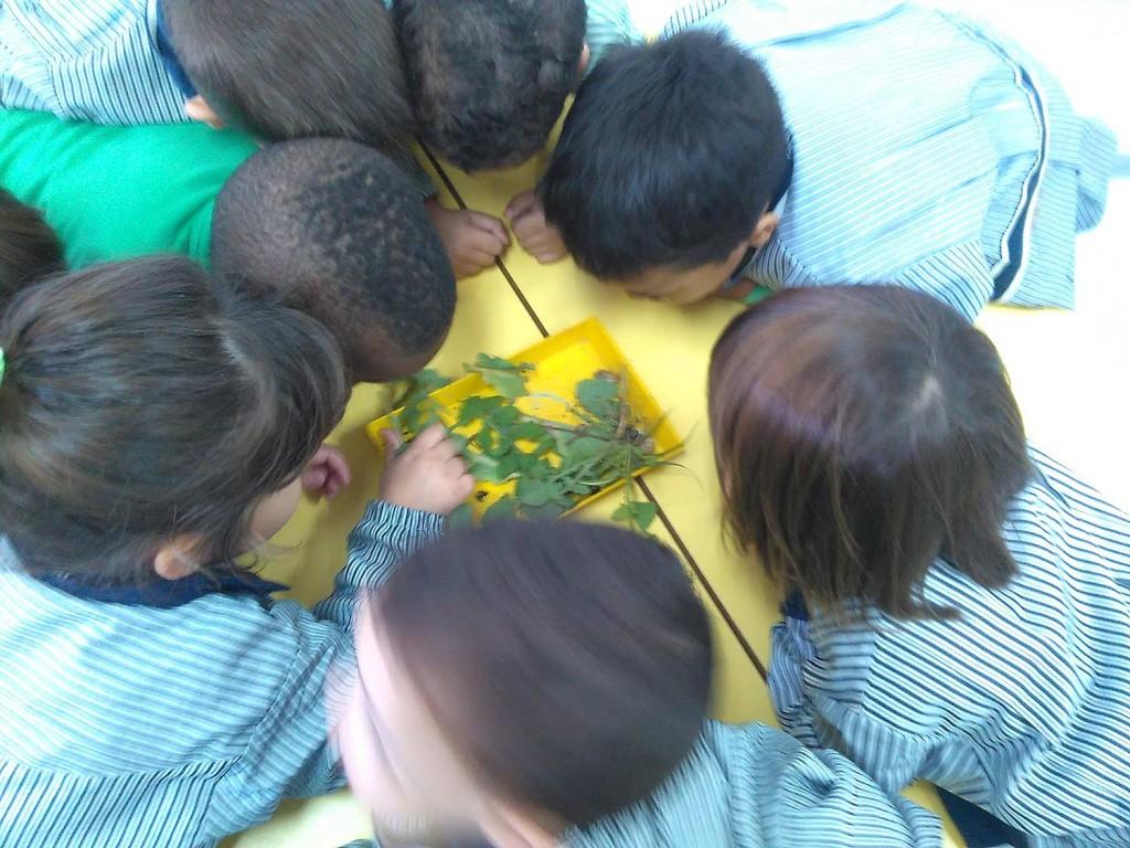 blog-3-7-hort-a-tres-anys-1