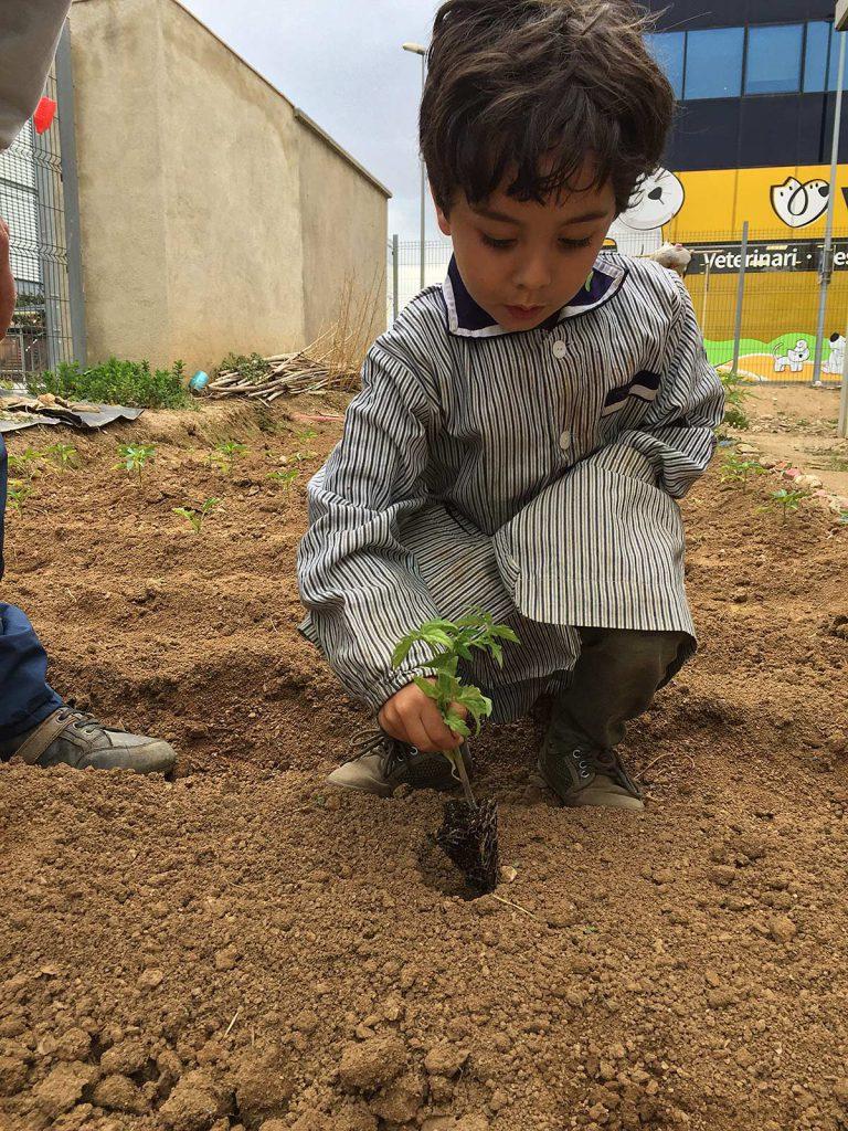 blog-3-7-plantem-verdures-(6)