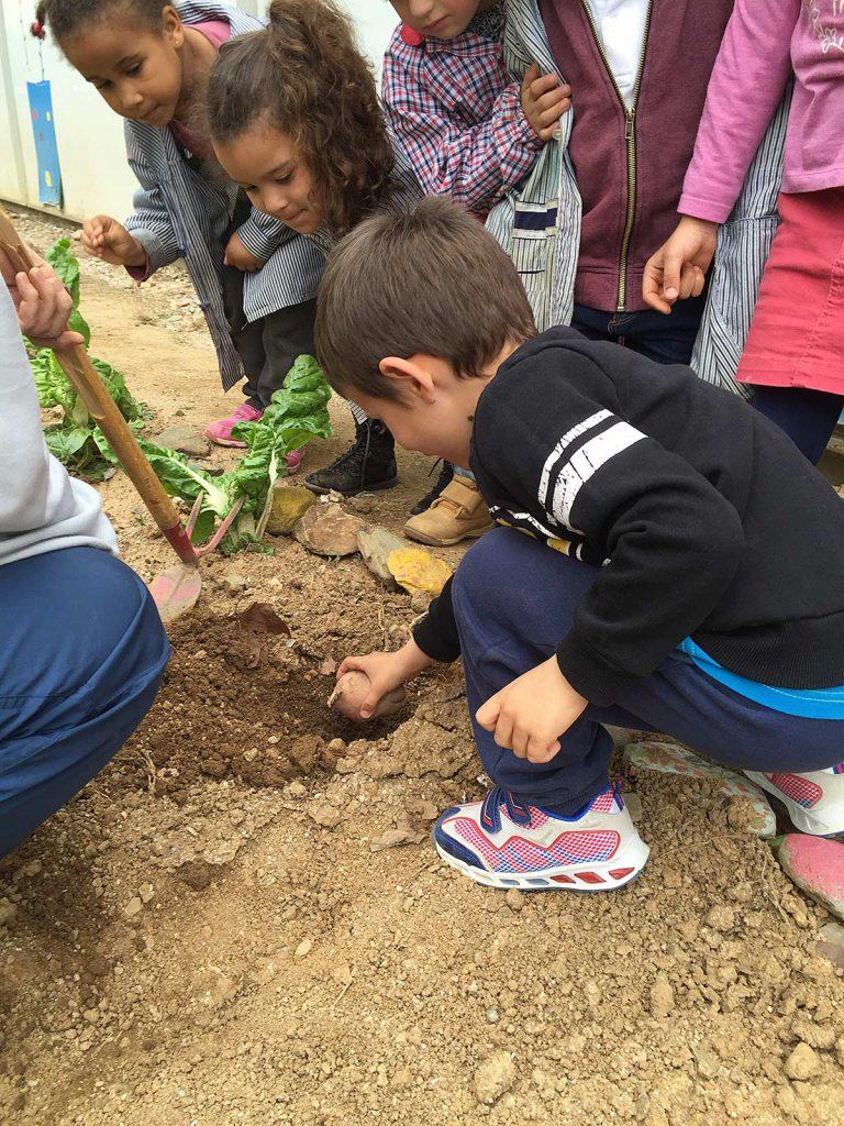 blog-3-7-plantem-verdures-(7)